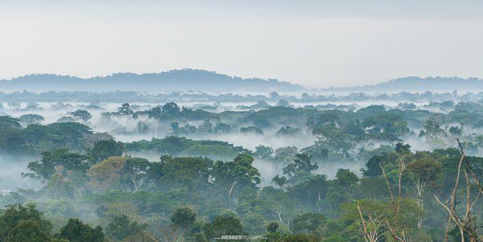 Rainforest : Webber Photography