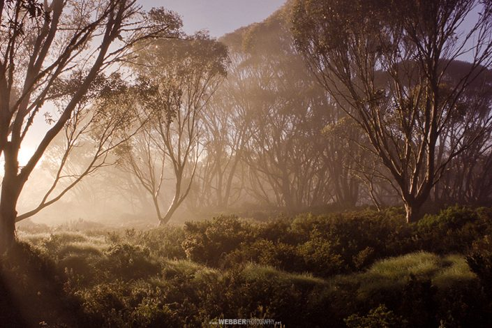 Wallace Hut : Webber Photography